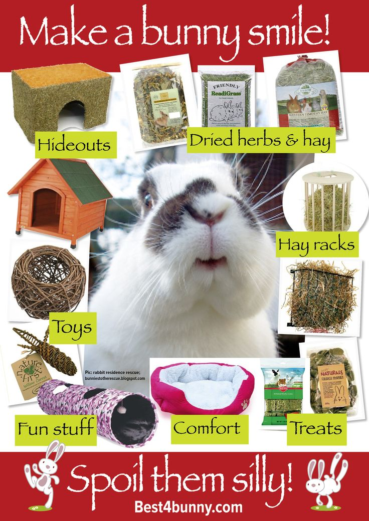 Make your bunnies smile... And spoil them silly with everything they love! For UK products visit http://best4bunny.com/bunny-products/ For overseas products visit http://astore.amazon.com/best4bunny-20