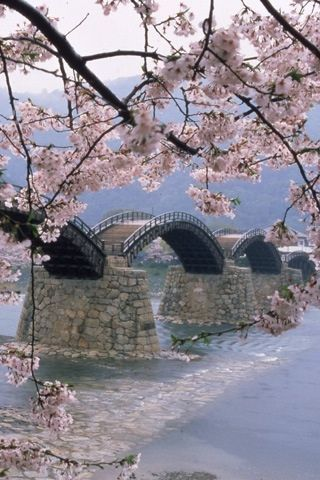 Kintai bridge with cherry blossoms, Japan