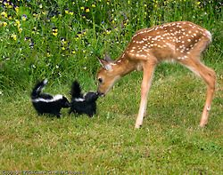 """Mama told you not to come.  """"That ain't the way to have fun, son."""""""