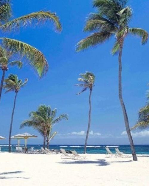 Nisbet Plantation Beach Club - Nevis Island, Saint Kitts and Nevis #Jetsetter  http://www.jetsetter.com/hotels/saint-kitts-and-nevis/nevis-island/2735/nisbet-plantation-beach-club?nm=serplist=7=image