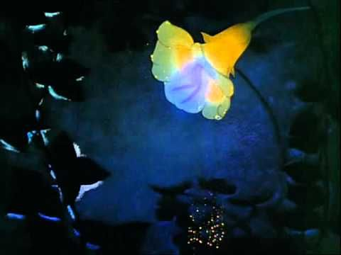 ▶ Fantasia - Dance Of The Sugarplum Fairy (Tchaikovsky) - Disney - YouTube