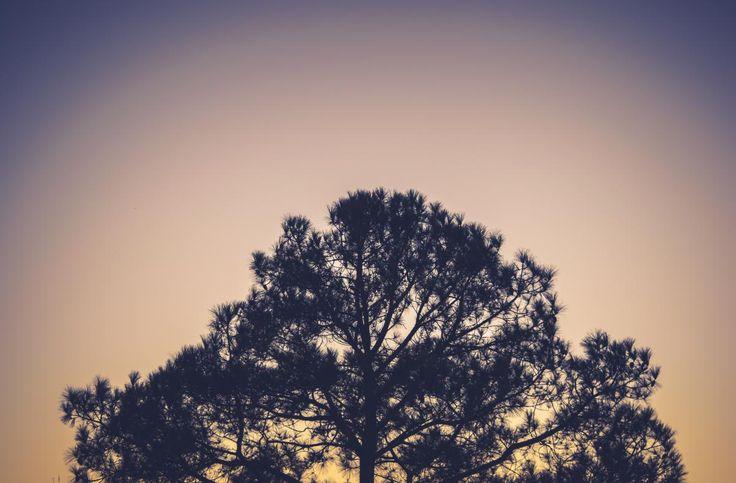 💚 Get this free picture Tree Landscape Oak    ✅ https://avopix.com/photo/10442-tree-landscape-oak    #tree #landscape #oak #forest #summer #avopix #free #photos #public #domain