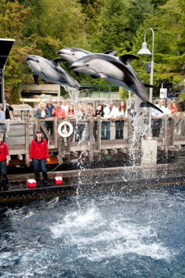 Reviews of top 10 Vancouver Attractions for Kids : Vancouver Aquarium #YVR #familytime