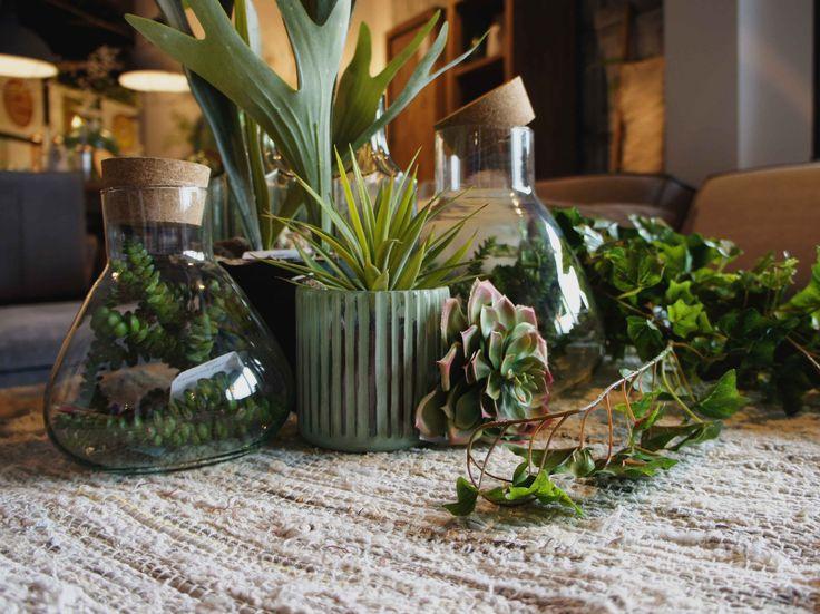 Plantjes voor de sfeer ik de woonkamer #prontowonen #droomwoonkamer
