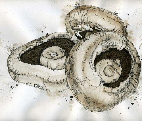 Mushroom Illustration Drawing   par WildArtCapture   Julia Ruffles