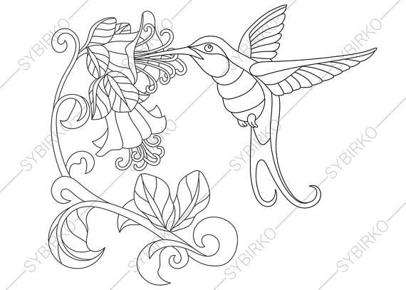 3 Coloring Pages Of Hummingbird Zentangle Doodle Adult Book Page Digital Illustration