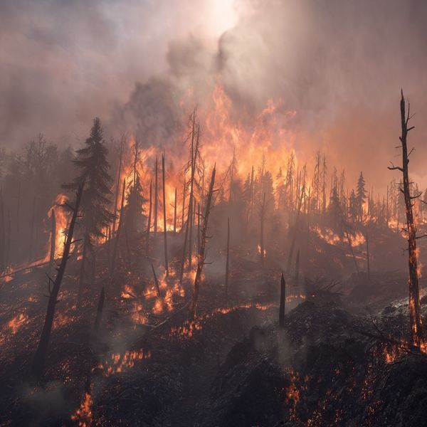Amazon Forest Fire Brazil Deadly Impact On Climate Change With