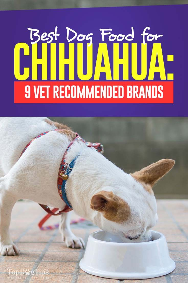 9 Vet Recommended Foods For Chihuahuas Best Puppy Food Dog Food
