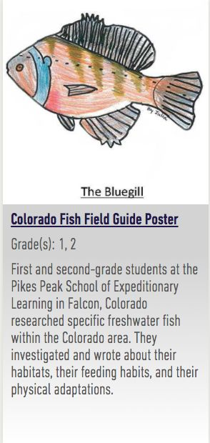 EL Education Models of Excellence Colorado Fish Field Guide Poster First and second-grade students at the Pikes Peak School of Expeditionary Learning in Falcon, Colorado researched specific freshwater fish within the Colorado area. They investigated and wrote about their habitats, their feeding habits, and their physical adaptations. Students worked through the writing process to create a cohesive paragraph about their Colorado freshwater fish to create a kid-friendly fish field guide.