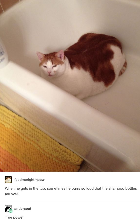 31 Tumblr Posts You Ll Love If You Re A Proud Unabashed Cat Person Cat Person Animals Cats Tumblr