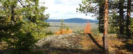 Many nature areas (Kylmäluoma, Julma Ölkky,Hossa) and national parks (Iso Syöte, Oulanka) are easily reachable by car.