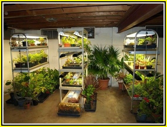 Simple Garden Ideas Thumb Not Green Try These Horticulture Ideas Simple Garden Ideas Indoor Vegetable Gardening Growing Food Indoors Hydroponic Gardening