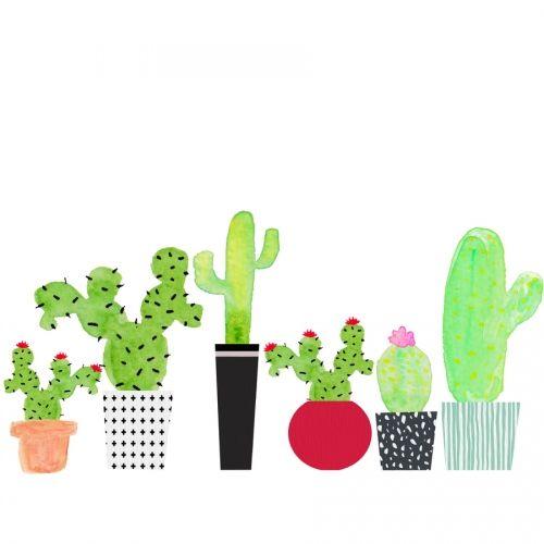 Cactus 02z