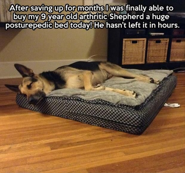 French Toast A Mazing What S Left Of It Anyway Lol: 606 Best German Shepherd Dogs Images On Pinterest