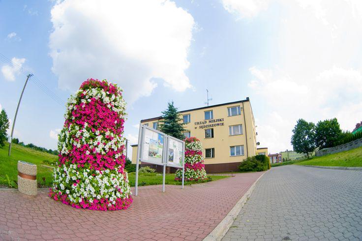 terra flower power - sędziszów