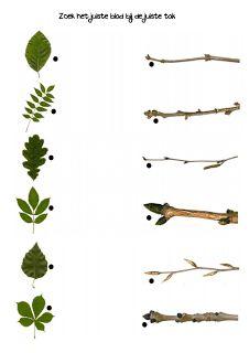 Verwerkingsbladen zoeken in het bos