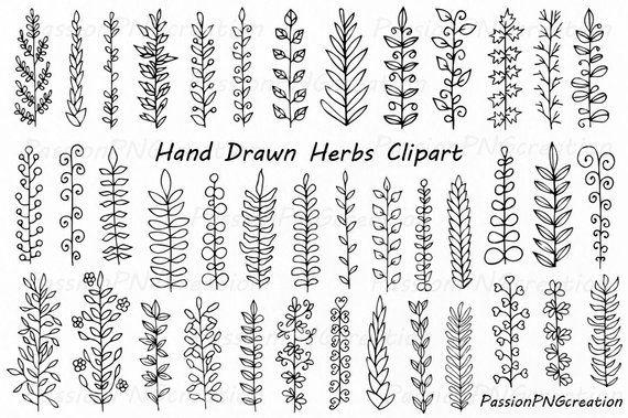 Hand gezeichnet Kräuter Clipart, Blätter ClipArt, Kräuter-Silhouette, PNG, EPS, AI, Vektor, Laurel Clipart, persönlichen und kommerziellen Gebrauch