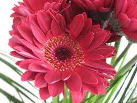 Floristic Academy - 4.lekce - YouTube