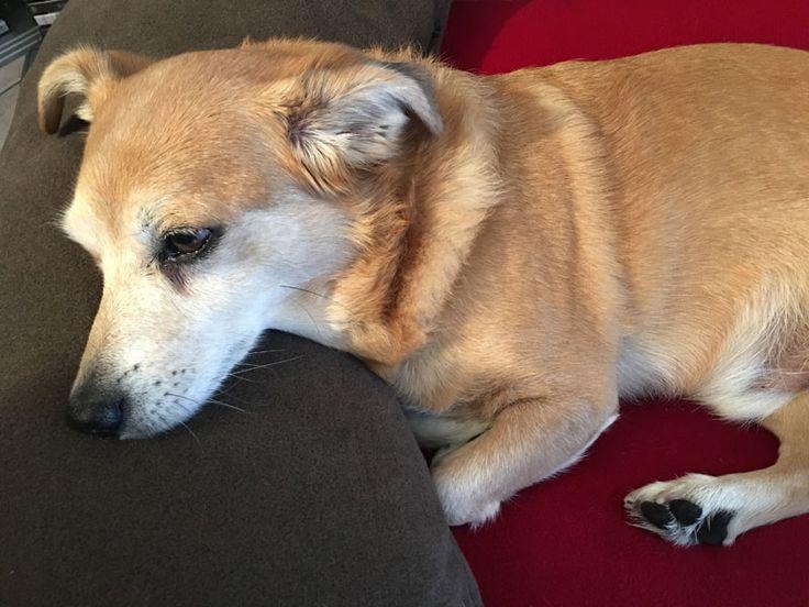 Ortho Hundekissen in rot, Kopfkissen in braun. Ortho dog cushion in red, head pillow in brown. Cuscino per cani ortopedico in rosso, cuscino testa in marrone.
