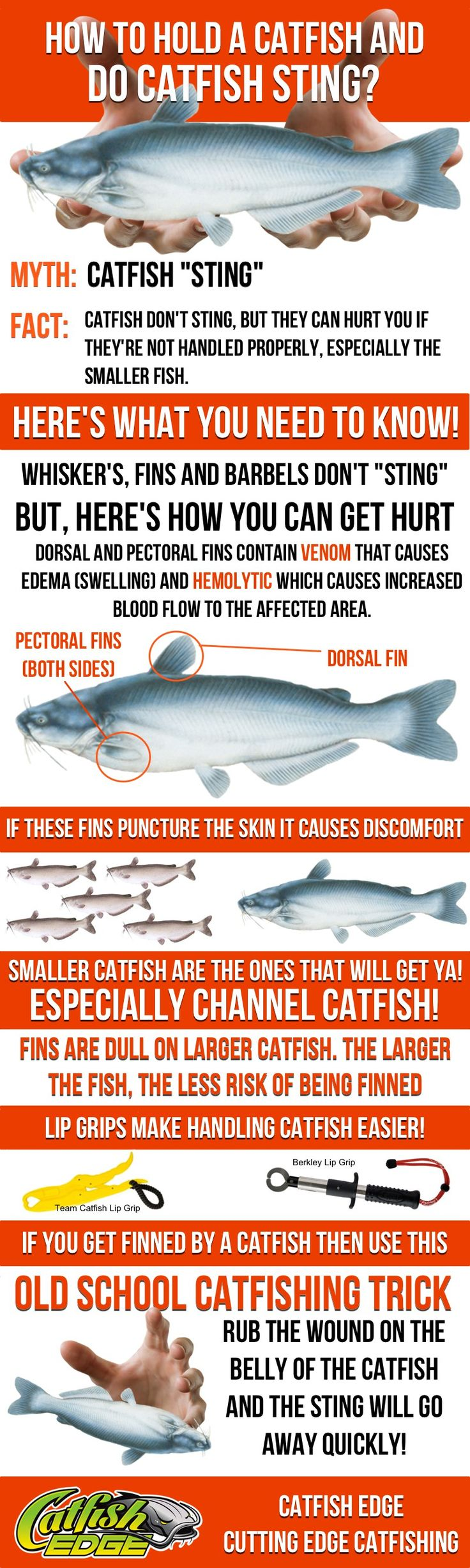 How To Hold a Catfish (and Do Catfish Sting)? Plus learn this simple trick to make the pain stop immediately.