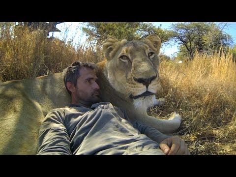 "11 Absolutely Audacious GoPro Videos | eHow Extras | eHow. This is a shame. These cats do not belong to humans and should not be treated as pets. This man will most likely be killed by a big cat just like Tim Treadwell was with his ""grizzly bear friends"" Treadwell got what he deserved, sad though , he brought his girlfriend out there and got her killed too."