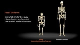 One of the oldest fossils ever discovered dated at 3.2 million years old, Lucy (Australopithecus afarensis) provided scientists evidence of bipedal, upright walking by human ancestors. In this animation, see what similarities Lucy shares with modern humans.  Trace the milestones of our species fascinating history in a dramatic addition to Tusher African Hall.  For more information visit http://www.calacademy.org/human-odyssey/ pre-dates Christianity, judaism, etc...