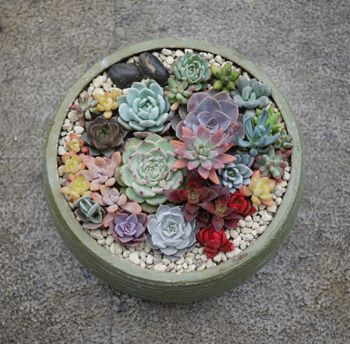 curly and bunny succulents as well as this  uber colourful mix, check out the blood red one! that can't be real?!