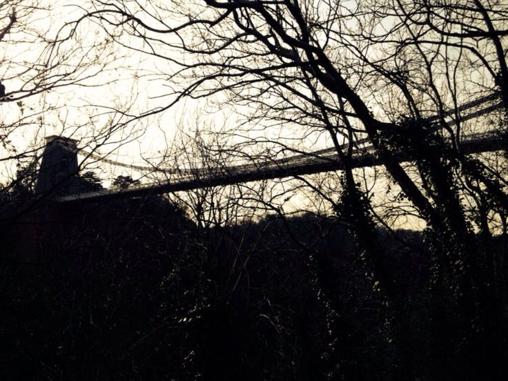Suspension Bridge through trees