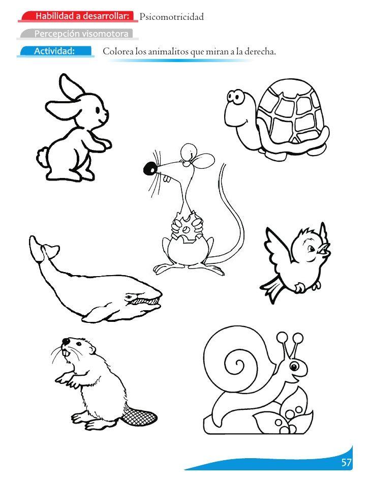 dibujos para colorear lateralidad a la derecha - Buscar con Google ...