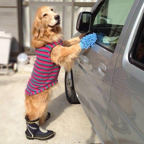 Best 25+ Dog Wash Ideas On Pinterest