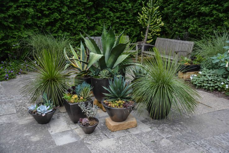 1663 Best Images About Containers Planters On Pinterest