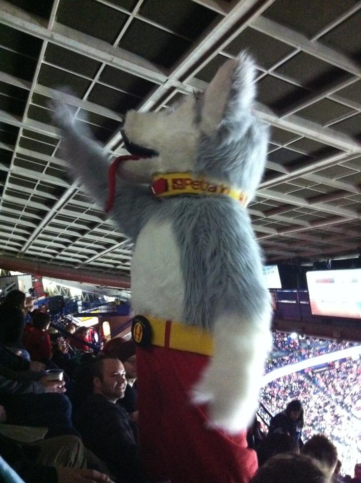 Harvey the Hound  #Calgary #Flames #mascot