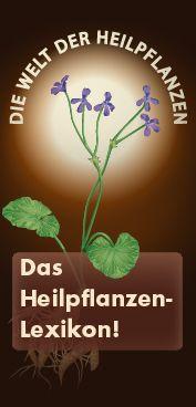 Umckaloabo Ratgeber Heilpflanzen