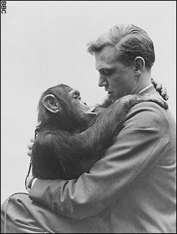 Sir David Attenborough. Google Image Result for http://www.edan-dolly.co.uk/wp-content/uploads/2010/05/news-graphics-2007-_448261a.jpg - a famouse person or not is holding something totally not expected.  Here it is a chimp.