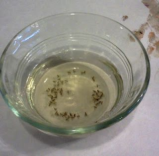 """To get rid of pesky fruit flies, take a small glass, fill it 1/2"""" with Apple Cider Vinegar and 2 drops of dish washing liquid; mix well. You will find those flies drawn to the cup and gone forever"""