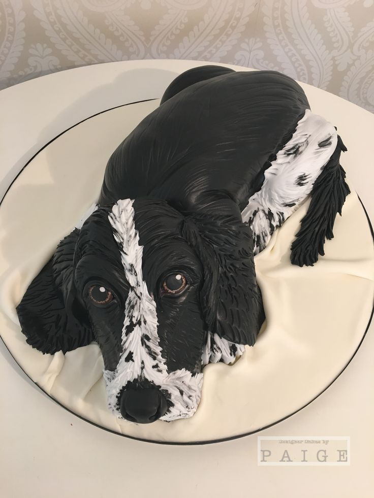 Realistic Cocker Spaniel Cake Made For A Dog Lovers