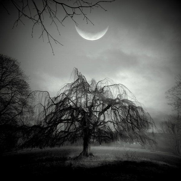 Moon Willow by lostknightkg.deviantart.com
