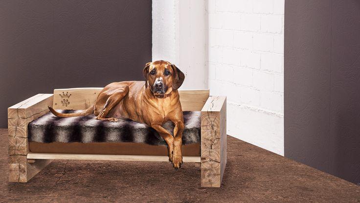 Foto: Uli Sapountsis  Hundeträume werden wahr mit unseren Produkte.