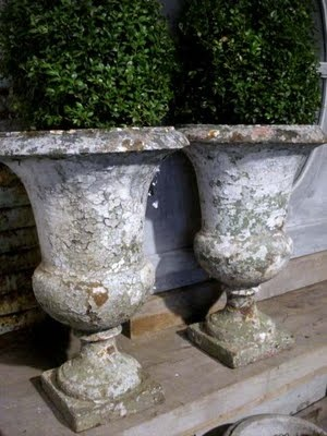 Antique urns holding boxwoods