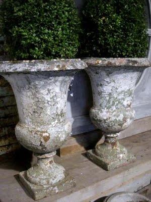 Antique urns holding boxwoods