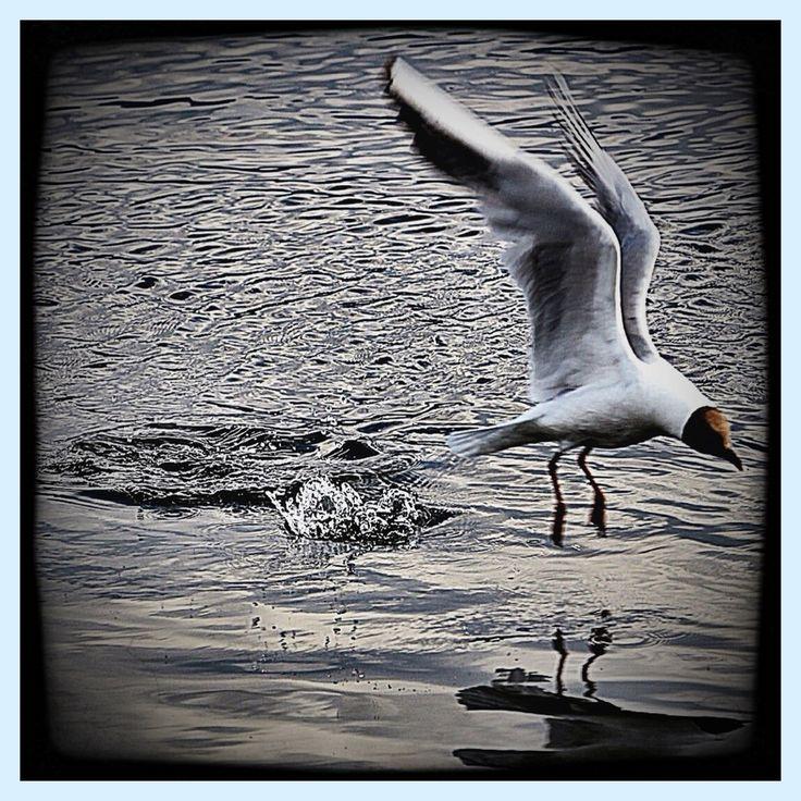 Flight by AngelEowyn
