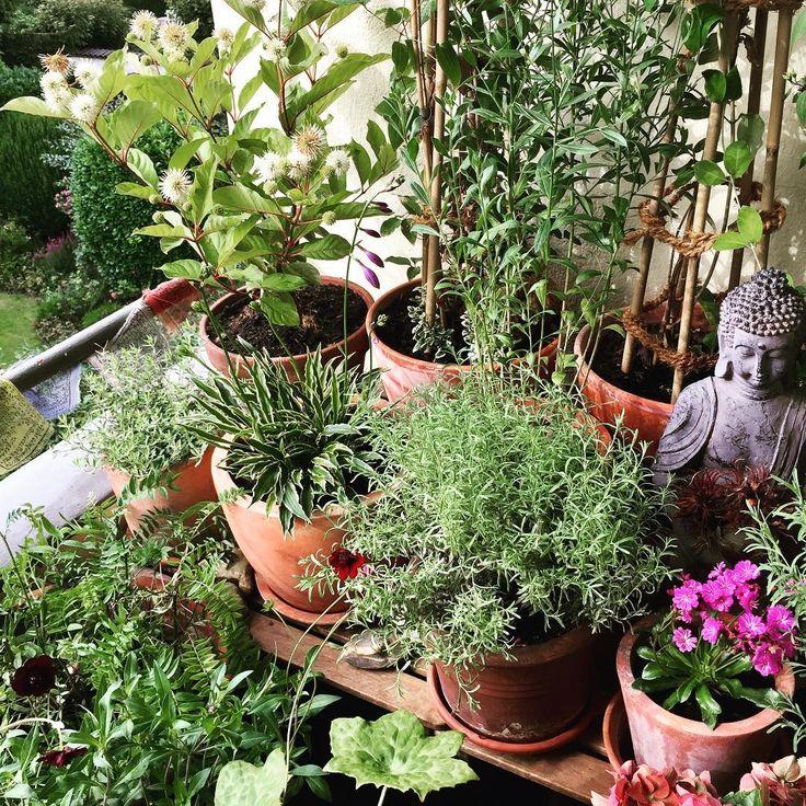 :: My little hideaway,... ����☀️ :: There is enough space for plants & flowers even in the smallest place :: #gardening #balconygardening #mayapple #geranium #lavender #hostahybrid #plantainlily #thyme #clematis #chephalanthus #graybeard #jasmine #balcony #balconyview #balkongärtnern #maiapfel #waldrebe #jasmin #lavendel #funkie #schokoladenblume #chocoladeflower #jakobsleiter #jacobsladder #platzistinderkleinstenhütte http://misstagram.com/ipost/1571186187602569918/?code=BXN-YNcDSq-