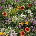Pollinator-friendly wildflower seed mixes by region.