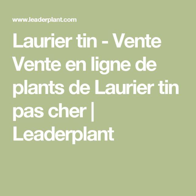 Laurier tin - Vente Vente en ligne de plants de Laurier tin pas cher | Leaderplant
