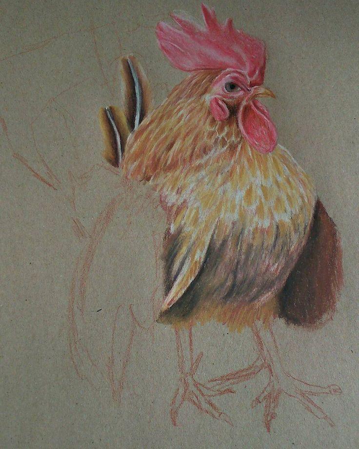 """""""#drawing#pencils #cock#illustration #sketchbook"""""""