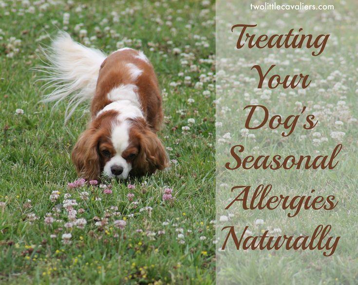 17 Best Ideas About Dog Allergy Symptoms On Pinterest