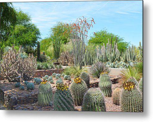 Dreamy Desert Cactus Metal Print by Aimee L Maher Photography and Art Visit ALMGallerydotcom