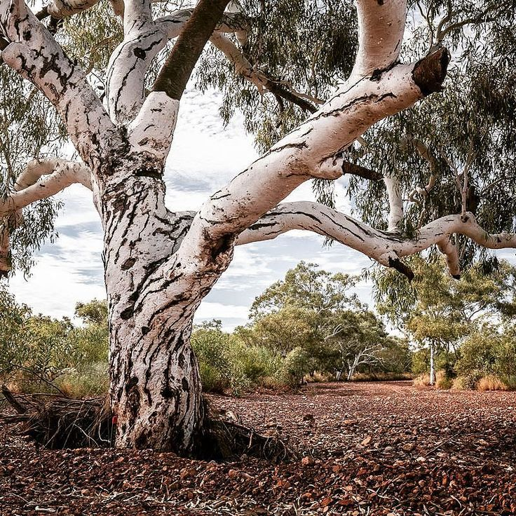 Dry river bed near Pannawonica  #gushagoeswalkabout #pilbara #canonaustralia #wow_australia #ig_australia #outbackaustralia