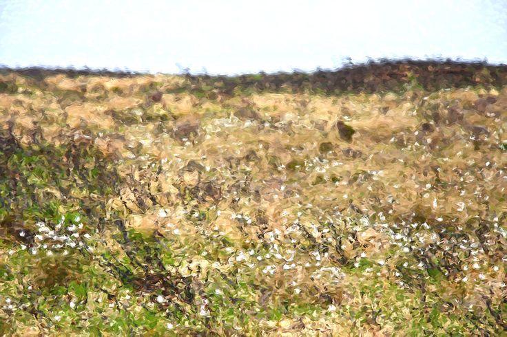 Scottish Flax - Scotland ©NoticePictures