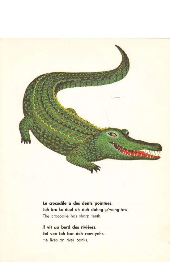 1186 best Animal art images on Pinterest | Animales, Bird artwork ...